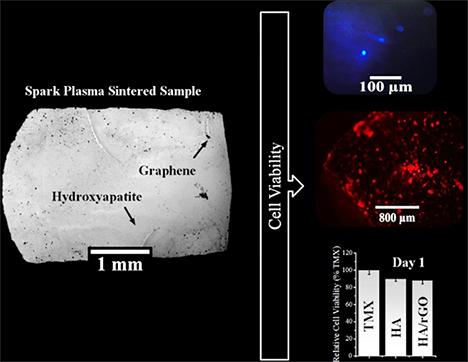 Studying the physical behavior of human mesenchymal stem cells on the surface of hydroxyapatite after adding graphene as a reinforcement